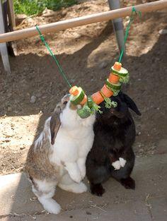 Kaninchen Info, Gehege, Beschäftigung