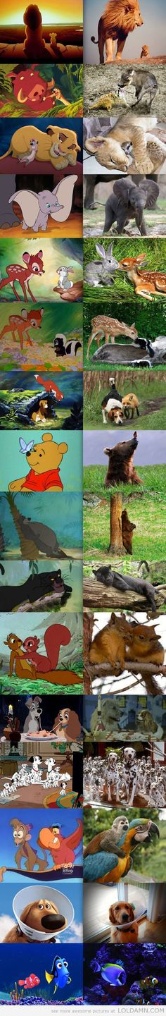 Disney animals in real life…