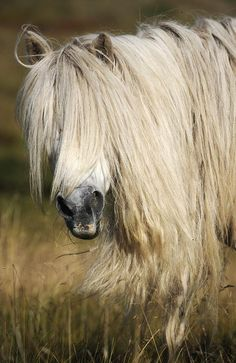 Natural blond by hultan.  Is that a Gypsy Vanner under there?    Here baby, there mama,   everywhere daddy daddy, Hair, long as I can grow it my Hair.  Twisted, beaded, braided, mangled, spangled, bangled and spagetti.  Oh say can you see my eyes, if you can then my hair's too short.  Down to here, down to there, down to where it stops by itself, da da da dadal la da da.