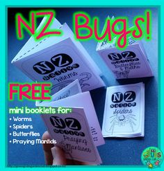 NZ BUGS! (FREE printables for Spiders, Worms, Praying Mantids Teacher Notebook, Classroom Environment, Garden Club, Outdoor Stuff, Preschool Classroom, Kids Education, Worms, Teacher Resources, Early Childhood