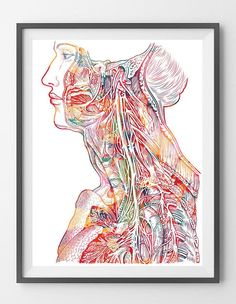 Neck And Chest Watercolor Print Human Anatomy Neck Chest And Shoulder Nerves Art Print Medical Art Wall Clinic Decor Gift Human Torso Print
