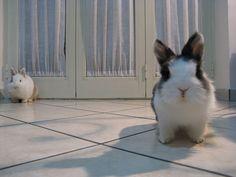 Bunnies planning an attack