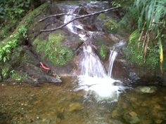 Biotopo, Baja Verapaz, Guatemala