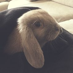 Good morning people  #saturday #funny #bunny #rabbit #funnybunny #soft#animals #animal #pet #dog #cat #dogs #cats #photooftheday #cute #pets #instagood #animales #cute #love #nature #animallovers #pets_of_instagram #petstagram #petsagram #bunnylove #animallove #tinybunny