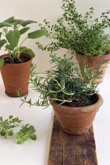 How to Remove Gnats From Potting Soil Indoor GardeningIndoor PlantsGardening TipsPotting