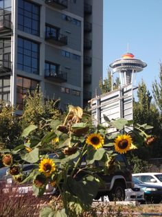 Seattle's urban PPatches, such as the Belltown PPatch with the Space Needle in the background, exhibits #Seattle's love of nature. #MyHometownPins