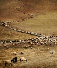 flocks of sheep and goats in the Greek countryside - Greece Photography Sites, Nature Photography, Beautiful World, Beautiful Places, Peaceful Places, Republic Of Macedonia, Go Greek, Destinations, Animals