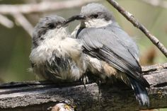 SeEtta's got more photos of this adorable nuthatch pair over on the Birds and Blooms Blog!