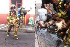 La Coordinación de Protección Civil y Bomberos Municipales rescató 2 perros y 8 gatos muy lastimados; fueron enviados a una clínica veterinaria cercana para su atención; Grupo Tigre de seguridad ...