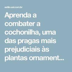 Aprenda a combater a cochonilha, uma das pragas mais prejudiciais às plantas ornamentais - 06/04/2010 - UOL Estilo de vida