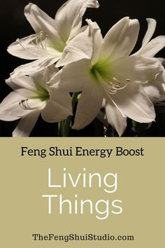 In Feng Shui Living Things, like these gorgeous amaryllis and other plants, can really boost your energy. Feng Shui Basics, Feng Shui Rules, Feng Shui Items, Feng Shui Principles, Feng Shui Art, Feng Shui Energy, Feng Shui Studio, Feng Shui House, Feng Shui Master