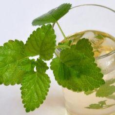 Ceaiul de roinita, un remediu excelent in combaterea insomniei nervoase Plant Leaves, Herbs, Medicine, Plant, Herb, Spice