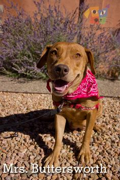 My name is Mrs. Buttersworth so clearly I'm awesome but if you were wanting more information, I am a quiet, sweet girl who hopes to find a family that appreciates my calm demeanor and good manners! Click my picture to look at my pet profile. :)