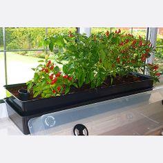 Windowgrow Planter shown on Windowsill