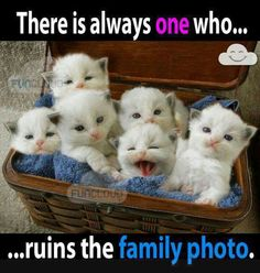 In our case... there is actually always two that ruin the family photo :)