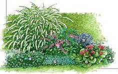 Пышный весенний уголок. 1-спирея серая 2 - дицентра великолепная 2 экз.) 3 - темно-фиолетовая аквилегия обыкновенная (Aquilegia vulgaris, 6 экз.) По периметру цветника пушистым валиком тянется герань кроваво-красная (Geranium sanguineum) 'Album', (2x5 экз.). 5- чистец византийский 4 экз.) 6 - бадан гибридный ' (4 экз.), Источник: http://www.7dach.ru/MoySad/cvetochnye-fantazii-sostavlyaem-effektnye-kompozicii-dlya-sada-21392.html#ixzz3xLRe90yC