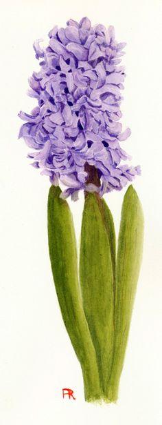Open Hyacinth