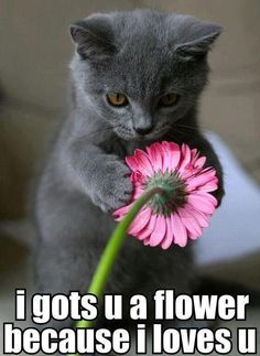 #Crazy Cat : I gots u a flower because i loves u