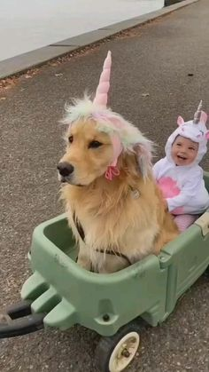 Cute Wild Animals, Baby Animals Pictures, Cute Animal Photos, Cute Animal Videos, Cute Little Animals, Funny Animal Pictures, Baby Farm Animals, Cute Baby Dogs, Cute Funny Dogs