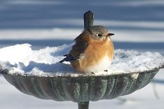 Winter birds need water too, but bird baths often freeze over. Get cost-saving tips for offering water to birds during cold weather