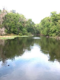 Hillsborough river state park kayaking camping for Hillsborough river fishing