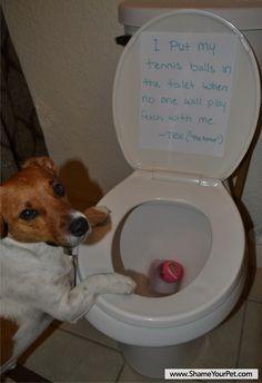Shame Your Pet   Dog Shaming • Cat Shaming   Shame Your Pet