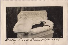 """Dog Post Mortem~Boston Terrier """"Betty"""" in Fancy Coffin~Vintage 1941 Photograph Photographie Post Mortem, Losing Your Best Friend, Sleep Forever, Pet Cemetery, Post Mortem Photography, Momento Mori, Boston Terrier Dog, Pre And Post, Old Dogs"""