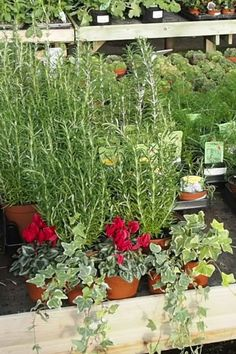 How to plant a winter window box – The Middle-Sized Garden – Do it YourSelf Interior Design Winter Window Boxes, Window Box Plants, Garden Posts, Box Garden, Garden Ideas, Container Plants, Container Gardening, Local Plant Nursery, Narcissus Bulbs