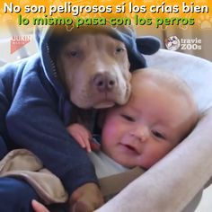 Pit Bulls are not dangerous - Only one is pit bull, but hey, the intention is good. Only one is pit bull, but hey, the intention - Cute Funny Animals, Cute Baby Animals, Funny Dogs, Animals And Pets, Dogs And Kids, I Love Dogs, Puppy Love, Cute Puppies, Cute Dogs