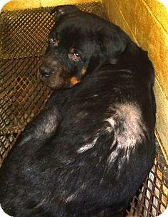 Animal Shelter, Animal Rescue, Rome Georgia, Rottweiler Mix, Email Subject Lines, Animal Protection, Sage, Tuesday, Adoption