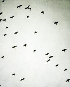 "Black and white Photography - flock of birds in flight pale gray black birds wall art  minimal modern decor  ""Upward"" on Etsy, $30.00"