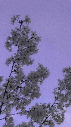 Night Sky Wallpaper, Purple Wallpaper Iphone, Iphone Wallpaper Tumblr Aesthetic, Scenery Wallpaper, Aesthetic Pastel Wallpaper, Tumblr Wallpaper, Aesthetic Backgrounds, Aesthetic Wallpapers, Wallpaper Backgrounds