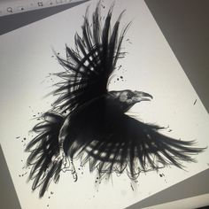 Sketch for a coverup. #Raven #raventattoo #sketch #spotlightonartist #nawden #freshnative #ohanatattoo #wa#wacomtablet #cintiq #cintiqcompanion by fresh_native