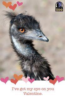 denver zoo valentine's day