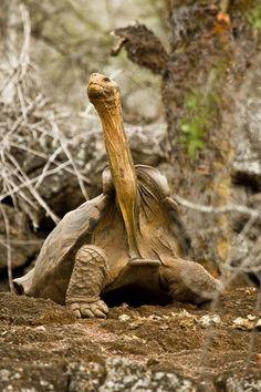 littlecritterz.com blog wp-content uploads 2015 09 tortoise.jpg