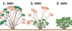 Rhododendron schneiden - Seite 2 - Mein schöner Garten