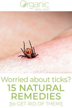 ▷ Worried About Ticks on Your Pets? 15 Natural Remedies to Get Rid of Them