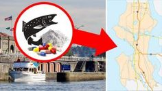 Caution: Salmon From This Region Contains Cocaine And Prescription Drugs