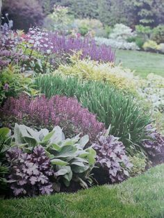 BHG - heuchera plum pudding,  Helen von stein lamb's ear, geranium ballerina; allium summer beauty