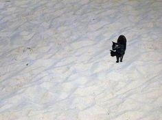 Cat on the beach  St. Martin