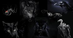 Take a personality test to assess your personality and the first animal that you see first in the photo will reveal your personality. Primal Fear, Greatest Mysteries, Good And Evil, Black Panther, Dark Side, Mammals, The Darkest, How To Find Out