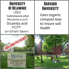 Pin By Leslie Inman On Lawns With Images Compost Tea Lawn Pollination