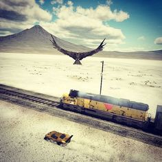 What's up? Oh nothing much, just chasing trains to the hill top with a vulture preying at me by @varunsarma31 | Join Project #AltEx  #fordgt #circuitspec #circuit #train #vulture #flatlands #mountains #pcgaming #racingtrains #gaming #gameplay #gamingphotography #altex #hype #varunsarma31#virtualphotography #ps4share#gamingpic #gaming #ingame #photography #videogames #instagame #screenshot #gamingmods #virtualphoto #lifewithfeelings Vulture, Ford Gt, Screen Shot, Games To Play, Circuit, Videogames, Trains, Gaming, Join