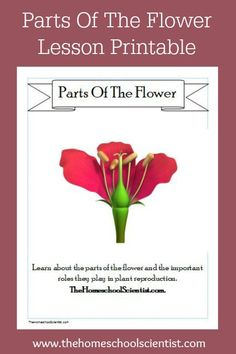 Parts Of A Flower Lesson Printable subscriber freebie