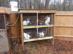 DIY Rabbit Hutch Build | Easy Food Storage