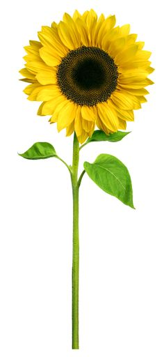1000+ images about Sunflower Hospice on Pinterest ...