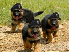future police dogs