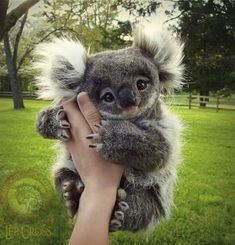 Koala toy by Lee Cross Baby Animals Super Cute, Cute Little Animals, Cute Funny Animals, Cute Dogs, Baby Animals Pictures, Cute Animal Photos, Funny Animal Pictures, Fluffy Animals, Fluffy Cows