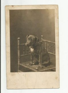 Early 1900s RPPC Young Dog On Bamboo Chair Charles Hayes Unionville Ct Photo