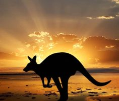 Austrailia is one of the most well known country for its wilderness, tourist attraction, and the locals. But the one that stands out the most is in the shadow of the sun, a kangaroo. My favorite animal i wish to see, real life, and interesting to learn about.